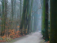 The walk... (Zoom58.9) Tags: bäume holz nebel blätter weg trees wood fog leaves way landschaft natur wald landscape nature forest sony europa europe deutschland germany bremerhaven