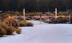 Fenced Juniper (arbyreed) Tags: arbyeed snow fence gate sage rabbitbrush juniper pinionpine severecountyutah