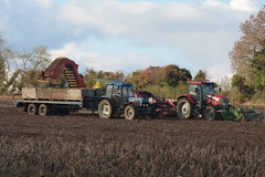 McCormick T3 XTX 165 Tractor with a Standen Pearson Potato Flail & a Grimme GZ1700 Potato Harvester filling Potato Boxes on a Smyth Trailer drawn by a Ford 8340 Tractor (Shane Casey CK25) Tags: mccormick t3 xtx 165 tractor standen pearson potato flail grimme gz1700 harvester filling boxes smyth trailer drawn ford 8340 agro red cnh nh newholland blue potatoes spud spuds tattie tatties dig digging traktor traktori tracteur trekker trator ciągnik castletownroche crop crops agri agriculture farm farmer farming county cork ireland irish tillage pulling pull horse horsepower hp working work farmmachinery machinery land field harvest harvesting autumn