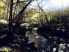 RIACHUELO OTOÑAL (agustincordoba_g) Tags: otoño paisaje arboles arte agustin ucieda cantabria bosque