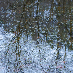 10/365 Gloomy Day (Jane Simmonds) Tags: winter pond water trees abstract forestofdean reflections gloomy 3652019