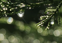 Refraction (speech path girl) Tags: waterdrops water raindrop rain droplet light bokeh juniper refraction wet