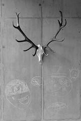 THE TROPHY, THE JOINTCROSS & THE CHILDREN'S DRAWINGS (LitterART) Tags: 50mm nikond800 fx geweih kinderzeichnung childrensdrawings childsdrawing mauer cross kreuz kruzifix mementomori monochrome