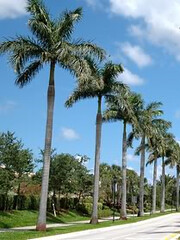 palmtree (larryslions) Tags: x 209x 279 original