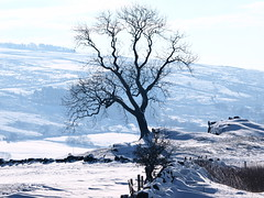 Alone@proud. (johnb/Derbys/UK) Tags: aloneproud shape snow peakdistrict dalestaffs staffordshire roaches weather colour countryside cold thelook trees pov