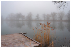 Matin d'hiver brumeux (Pascale_seg) Tags: paysage landscape étang river riverscape brume mist misty brouillard matin aube hiver winter froid moselle lorraine france grand grandest nikon reflets reflections riflessi inverno nebbia arbres trees alberi roseaux