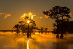 Sunrise at Caddo lake (FollowingNature (Yao Liu)) Tags: bayou fallfoliage visittexas followingnature ngc boat baldcypress misty sunrise texas caddolake