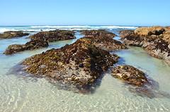 DSC_0904 (afagen) Tags: california pacificgrove montereypeninsula asilomar beach pacificocean ocean asilomarstatemarinereserve