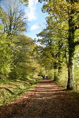 Deep Into The Woods (Worthing Wanderer) Tags: nymans clouds autumn november sunny sussex westsussex park nationaltrust woodland woods forest