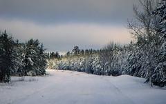Layers --Explored (yooperann) Tags: gwinn upper peninsula michigan snow sunny day clouds road