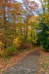 Herbst Bilder (KaAuenwasser83) Tags: weg strase schlossgarten fasanengarten baum bäume bunt laub blatt blätter nadeln herbst