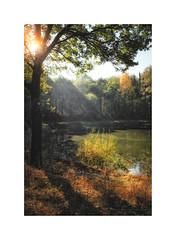 Heijkersbroek in autumn IX (Passie13(Ines van Megen-Thijssen)) Tags: ell heijkersbroek herfst wandeling netherlands autumn herbst fujifilm x100f nature inesvanmegen inesvanmegenthijssen