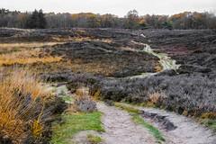 A curly path through the heath (j.a.vink) Tags: color heath netherlands fujifilm 1855 fujifilm1855mm fujifilmxt2