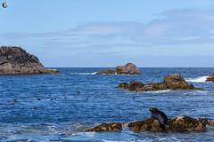 Grey Seals (dieLeuchtturms) Tags: 3x2 grosbritannien meer europa atlantik keltischesee cornwall scillyisles england celticsea europe greatbritain sea vereinigteskönigreich gb