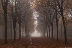 Happy dog.. 🐶 (CarolienCadoni..) Tags: sony sonyilcaa99m2 ilca 70200mmf28gssmii sal70200g2 autumn autumncolors autumnleaves animal dog vledderbos groningen