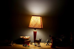 Call it a Day... (Haytham M.) Tags: canont7i 1770mm november autumn fall animals goodnight evening light dresser lamp relaxation comfort cozy home