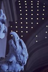 Lille's Art Museum (Marco le Méro) Tags: europe hauts de france nord north lille nikon nikkor 18 140 d5300 flickr portrait ville city buildings bâtiments art fenêtre windows day jour blanc white eagle aigle bird prey oiseau proie faucon falcon autumn fall november october camera textures texture colours blur flou