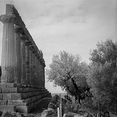 Tempio di Giunone (tommaso.piccoli) Tags: 2018 agrigento bencini koroll valledeitempli giunone analogicait