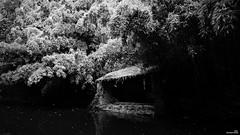Le lavoir à l'ombre des bambous (Un jour en France) Tags: lavoir ruisseau rivière bambou monochrome canoneos6dmarkii canonef1635mmf28liiusm noiretblanc noiretblancfrance