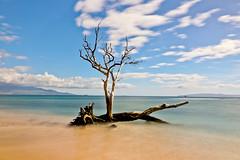 AB3I0231A (Aaron Lynton) Tags: neutraldensity nd maui hawaii paradise tree ukumehame ukumehamelongexposure longexposure lyntonproductions canon ndfilter