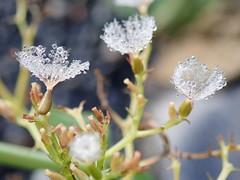 Droplets heaven (Landanna) Tags: droplets druppels dewdrops dew fallingintoautumn fall farverafefterår efterår herfst herfstkleuren autumn autumncolours