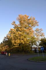 DSC_2258 (PeaTJay) Tags: nikond750 reading lowerearley berkshire gardens outdoors flora fauna plants flowers trees bushes