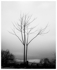_C210028-Mr (gillesporlier) Tags: tree trees arbre monochrome bnw blackandwhite noiretblanc omd olympus winter hiver