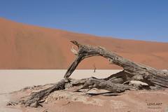 Gerahmt - Framed (LENS.ART Photographie) Tags: namib naukluft wüste namibia desert dünen dunes camelthorn kameldorn abgestorben deadvlei sossusvlei nikon d7200 rahmen frame baum tree natur nature landscape landschaft afrika sand