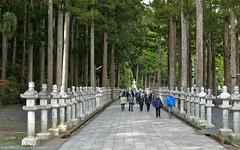 Japan: Koyasan, Okunoin Cemetery (Henk Binnendijk) Tags: koyasan wakayamaprefecture japan okunoincemetery graveyard tombstones gravestones tombs mausoleum unescoworldheritagesite kobodaishi monk kukai