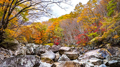 Piagol Valley in Jirisan National Park during Autumn (patuffel) Tags: piagol valley jirisan nationalpark park national korea south foliage autumn red leaf leafes maple rocks rock river waterfall m10 leica 28mm summicron stone tree forest colours colors yellow