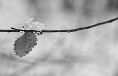 Ice (Peter_Cameron) Tags: olympusomdem1 mzuiko75mmf18