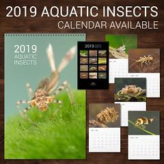 2019 Calendar - Aquatic Insects (Jan Hamrsky) Tags: macrophotography macrophoto freshwaterinvertebrates aquatic aquaticinsects aquaticbeetle aquaticinvertebrates insects insect invertebrates hamrsky calendar