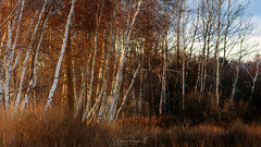 Realm of the Whispering Woods No.1 (Simmie | Reagor - Simmulated.com) Tags: connecticutphotographer d750 landscapephotographer naturephotographer nikon digital milford connecticut unitedstates us