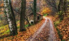 la casetta nel bosco ... (Roberto Defilippi) Tags: 2019 22019 rodeos robertodefilippi natura casa autunno autumn tmpanel strada sentiero