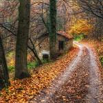 la casetta nel bosco ... thumbnail