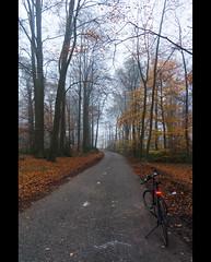 Between Oldenzaal and De Lutte (blokkadeleider) Tags: oldenzaal oldnzel delutte twente tweante overijssel nederland niederlande netherlands oatmöske oaweriessel fiets fahrrad bicycle cube cubebikes hyde frankencube herfst herbst autumn