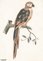 A Parrot on a Branch by Johan Teyler (1648-1709). Original from The Rijksmuseum. Digitally enhanced by rawpixel. (Free Public Domain Illustrations by rawpixel) Tags: otherkeywords pdproject animal antique art artwork avian beak beautiful beauty bird branch color colorful design drawing fancy fauna feather illustrated illustration johanteyler leaf name native natural nature old one ornithology paint painting parrot perched plumage portrait retro single tail vintage wild wildlife wing tagcc0