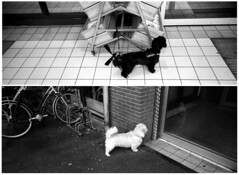 The Deka Dogs (selyfriday) Tags: selyfriday wwwnassiocomempty nassiocom hasselblad xpan panorama wide 35mm film analogue 45mmf4 2711 ilford f p4 expired rodinal 125 20˙cnederland netherlands holland dutch deka dogs fp4