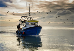 Coming home (Harleycy3) Tags: leighonsea marinelife bytheseaside fishermanslife
