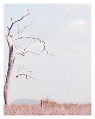 Untitled (Bron.Wolff) Tags: ifttt 500px grassland tree grass countryside trunk nature landscape minimalism plainlands grassy scenery woodland big