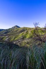 20181211DSC08798 (mchlphlmnn) Tags: afrika africa südafrika southafrica southernafrica westcape gardenroute