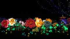 DSC07030 (orb334) Tags: festival des lanternes gaillac tarn fééries de chine 2018
