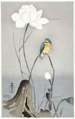 Kingfisher with Lotus Flower (1900 - 1945) by Ohara Koson (1877-1945). Original from The Rijksmuseum. Digitally enhanced by rawpixel. (Free Public Domain Illustrations by rawpixel) Tags: pdproject21batch2x otherkeywords tagcc0 animal antique art asian bird drawing illustration japan japanese kingfisher koson lotusflower museum name ohara oharakoson old paint rijksmuseum vintage