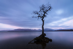 Loch Lomond, Scotland (Roman Popelar) Tags: loch lomond scotland united kingdom uk great britain lonely tree sunrise lake mountains long exposure