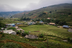 More Stepped Rice Fields, Ta Van Village, Sapa, Vietnam (hathaway_m) Tags: northvietnam 2018 sapa rice steppedfield