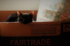 CHLOÉ & THE DUST BUNNIES (Poppy ♥ Cocqué ♫) Tags: cat chloé box fairtrade feline animal pet angel poppy ap poppycocqué unconditionallove heartwarming livinginthemoment dustbunnies sunlight