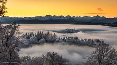 Sea of fog (Dani Maier) Tags: zürich schweiz ch uetliberg landscape dawn fog alps mountains trees winter