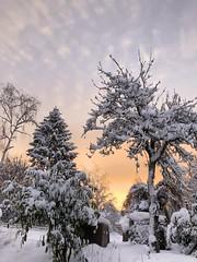 Sonnenaufgang im Winter - Bild aus einem Garten/ Sunrise in winter - picture from a garden (Bernd-BeNeFoto@gmail.com) Tags: iphone winter sunrise sonnenaufgang schnee snow garden garten