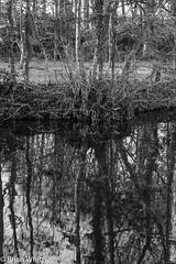 IMGP9338 (Brian H Whittle) Tags: blackwhite leedsliverpoolcanal rufford canal