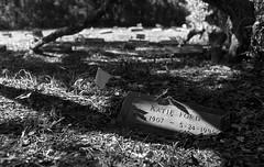 Pauper's Grave (PositiveAboutNegatives) Tags: nikon slr vintagecamera nikonf eyelevel plainprism film analog bw blackandwhitefilm kentmere100 rodinal 35mm nikkor nonai 35mmf2nikkoro coolscan florida grave cemetery